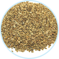 Cnidium Herb