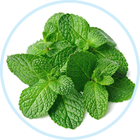 Mentha Piperita (Peppermint) Extract