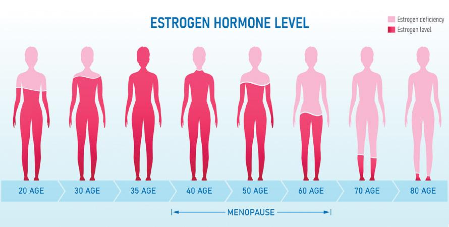 estrogen hormone levels