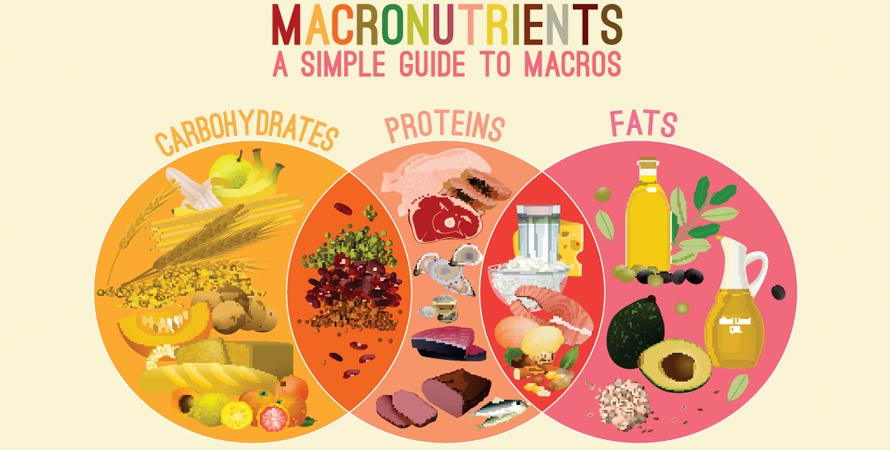Macronutrients carbohydrates fats