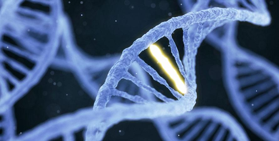 Genetical weight gain