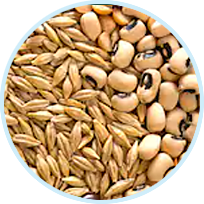 Soybean Protein and Hydrolyzed Rice Bran Protein